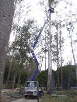 Poda de eucaliptos: a plataforma sobre caminhão Cheyene dá conta!